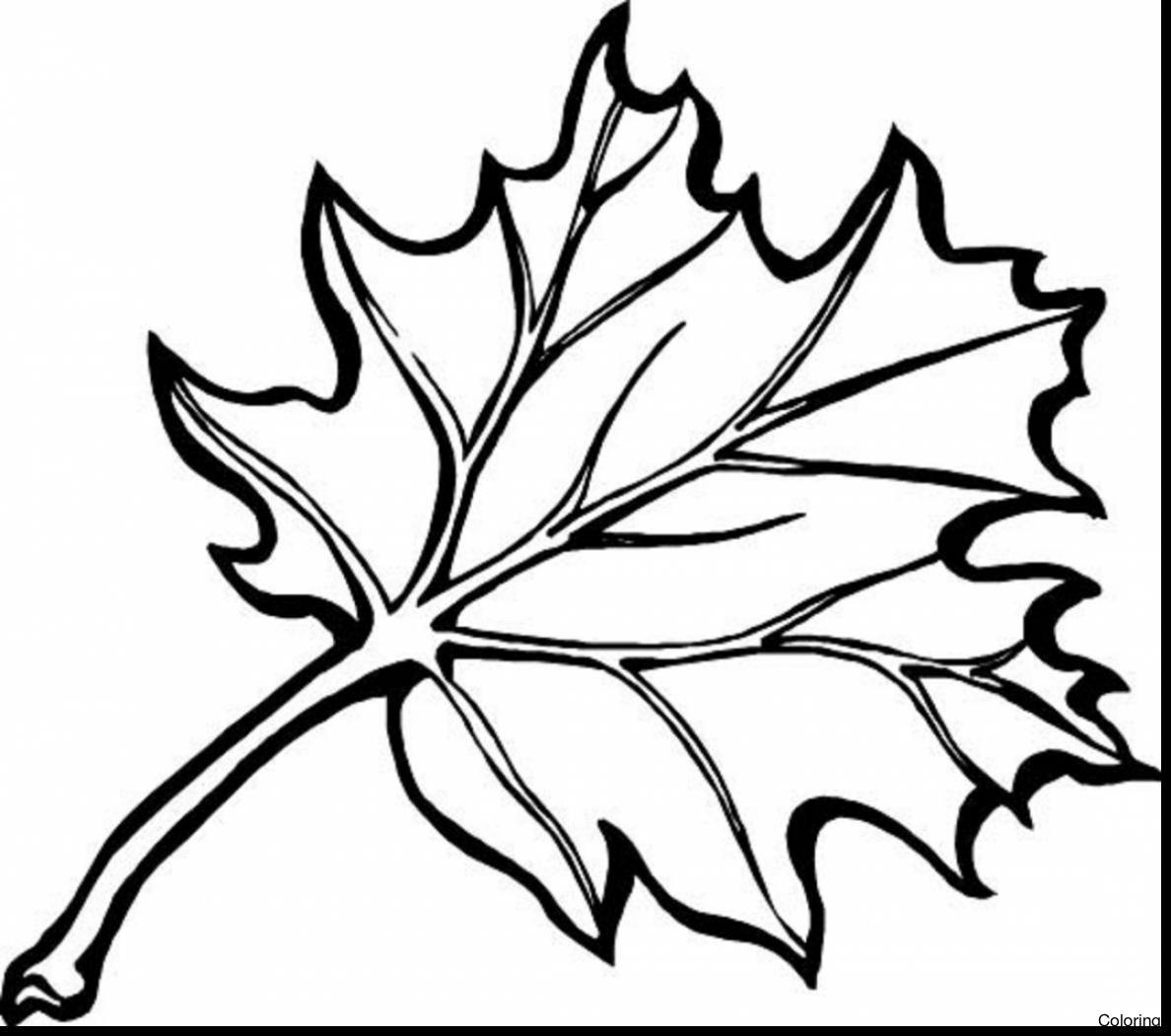 how to draw a pumpkin leaf pumpkin leaf drawing at getdrawings free download leaf to how a pumpkin draw