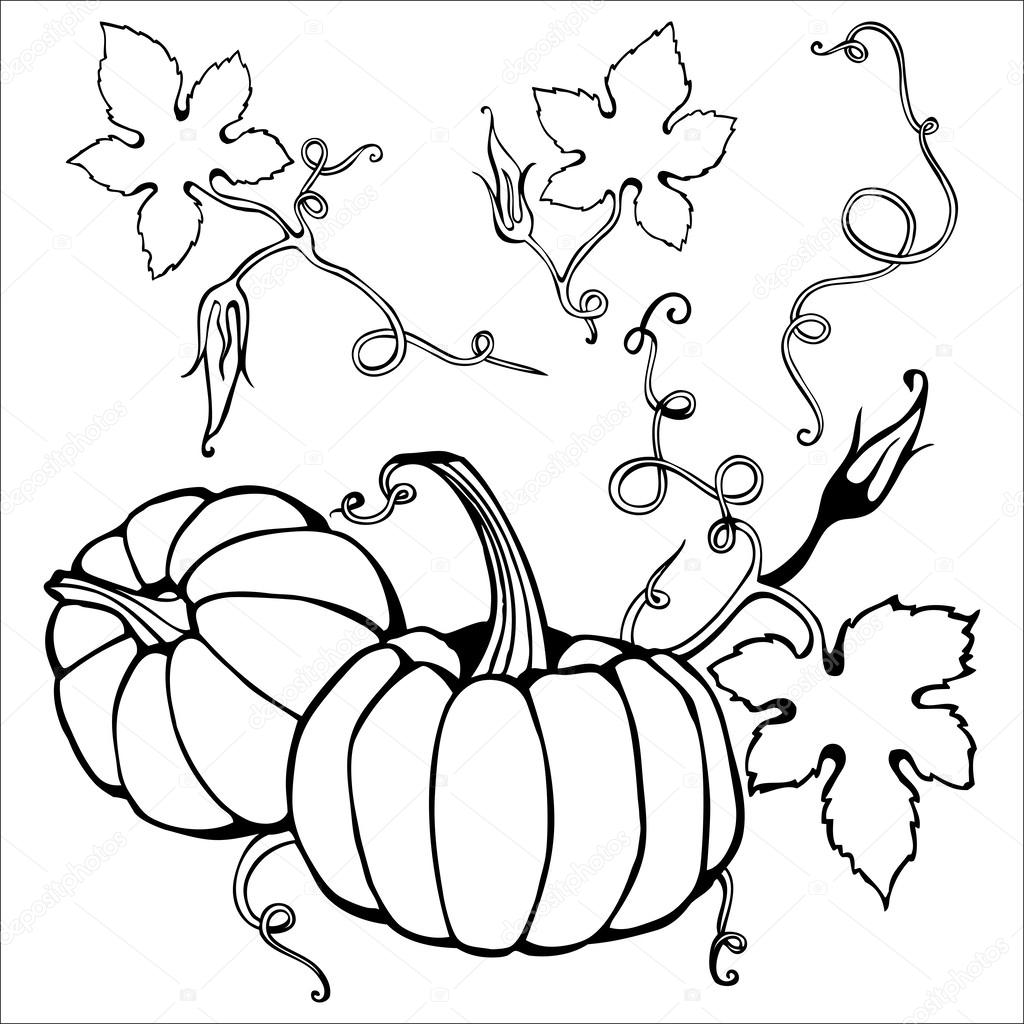 how to draw a pumpkin leaf pumpkin leaves drawing at getdrawings free download draw how a pumpkin leaf to