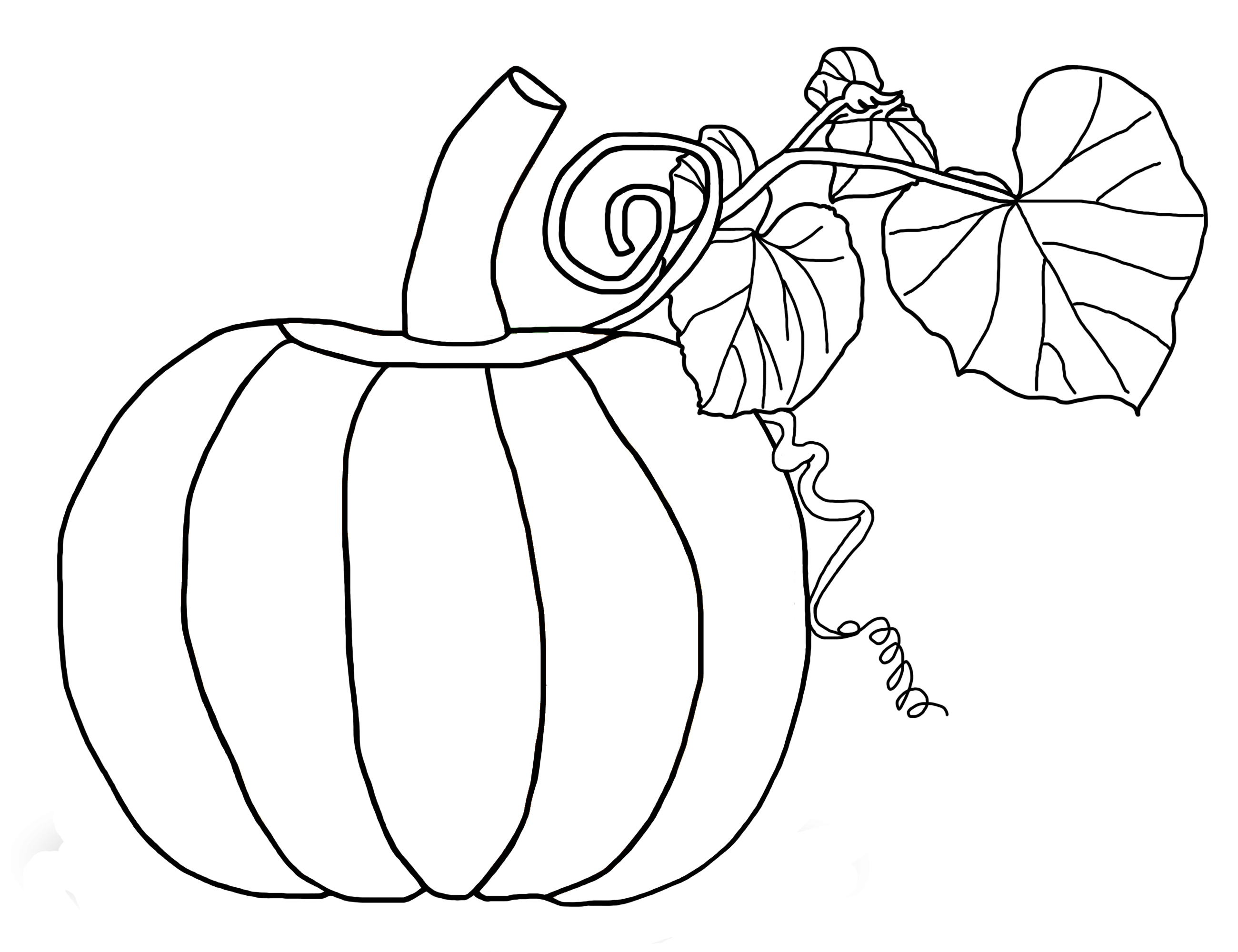 how to draw a pumpkin leaf pumpkin plant drawing at getdrawings free download to leaf draw pumpkin a how