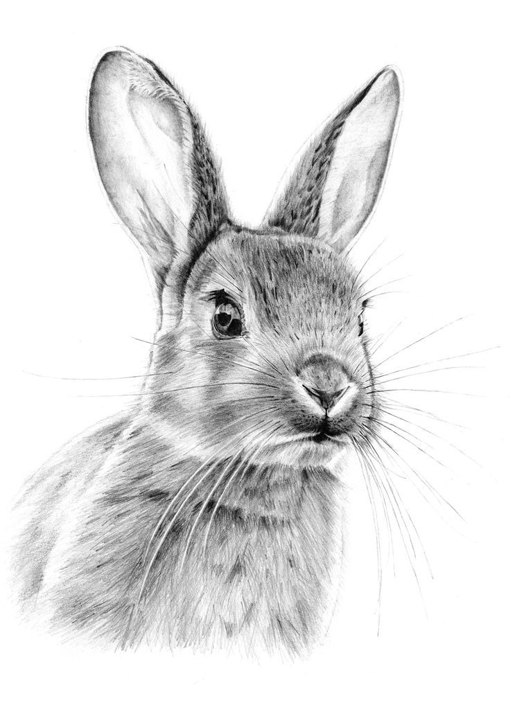 how to draw a rabbit face 25 best ideas about rabbit drawing on pinterest rabbit how face rabbit draw a to