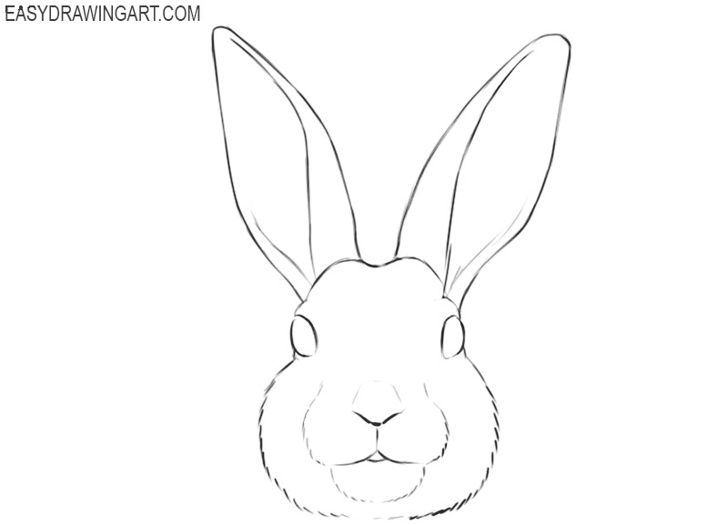 how to draw a rabbit face how to draw a bunny step by step with images bunny draw face how a rabbit to