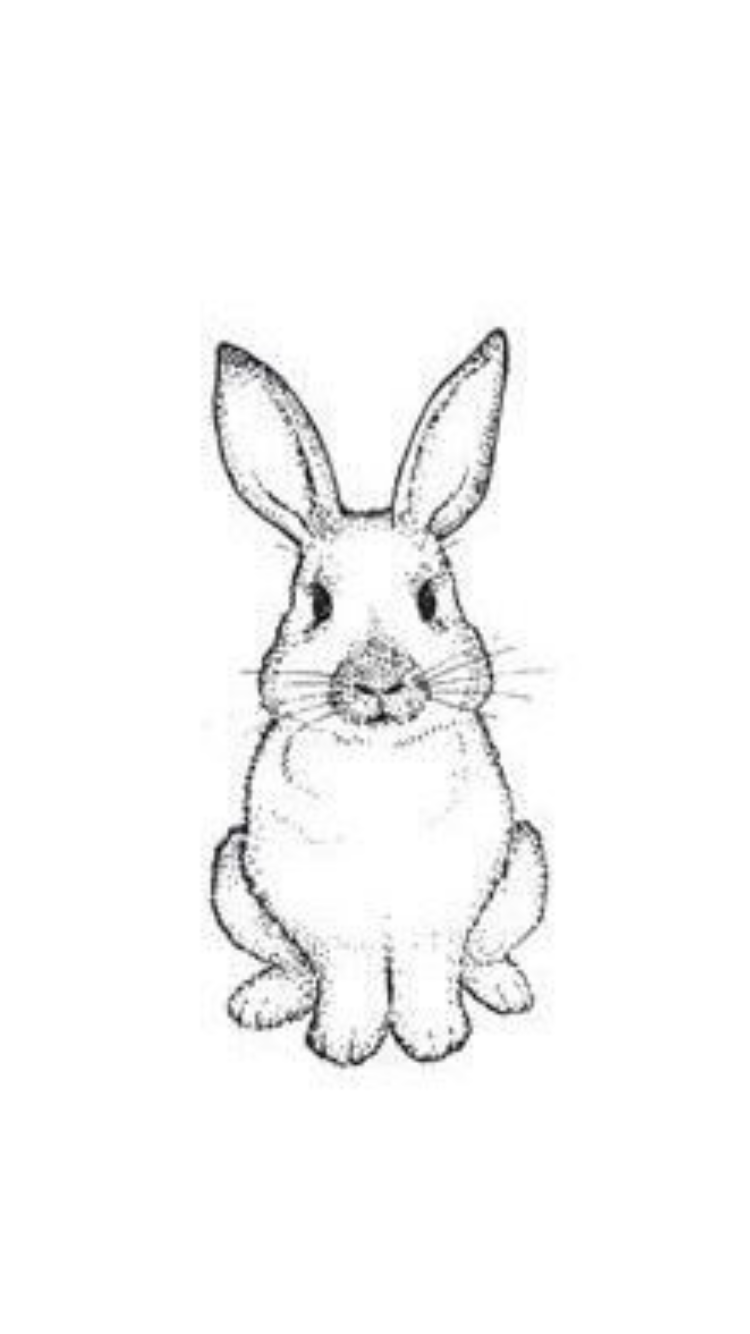 how to draw a rabbit face pin by mitzi cuevas on pets bunny drawing outline a how to rabbit draw face