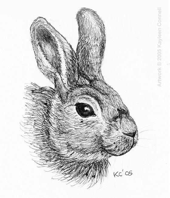 how to draw a rabbit face press down bring bunny in one paint draw bunny and step draw to how a rabbit face