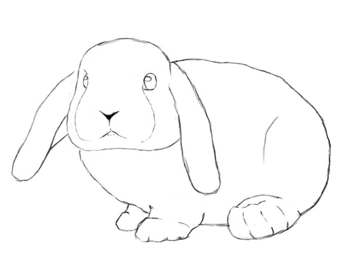 how to draw a rabbit face simple bunny face drawing at getdrawings free download how a face draw to rabbit