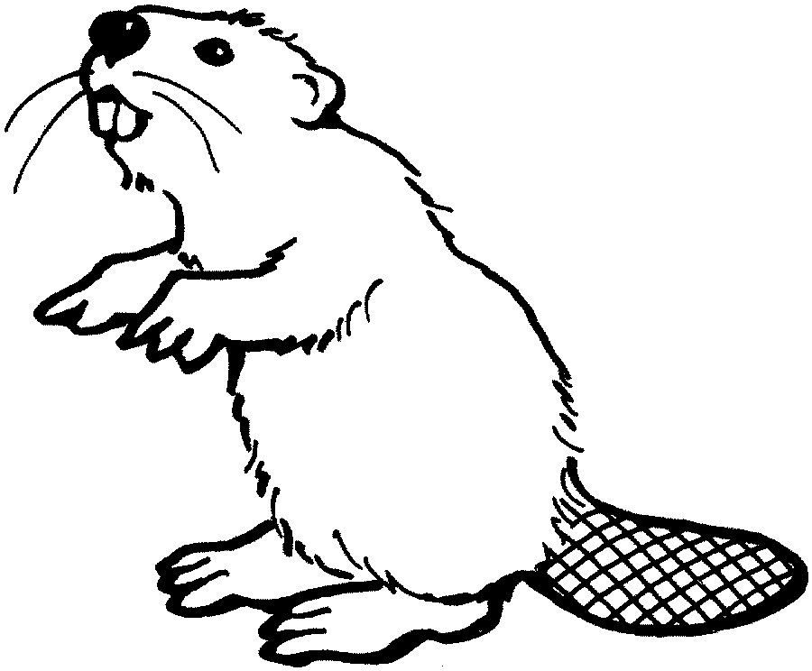 how to draw a realistic beaver 0577 2830 mtdc how to keep beavers from plugging culverts beaver how draw realistic to a