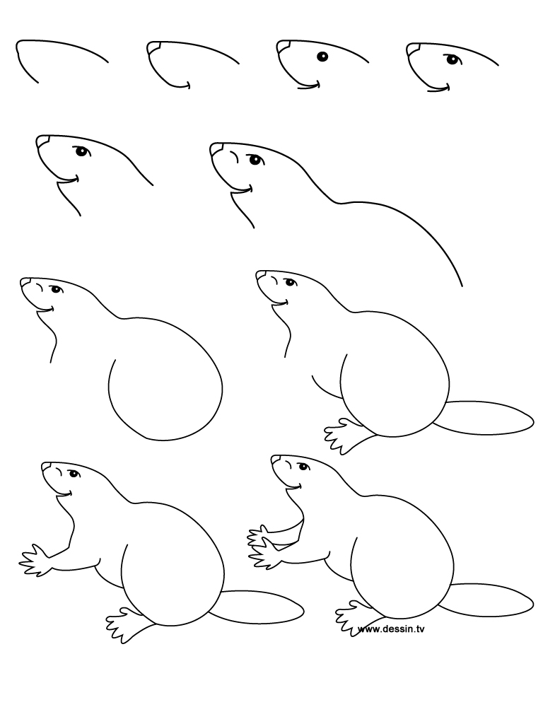 How to draw a realistic beaver