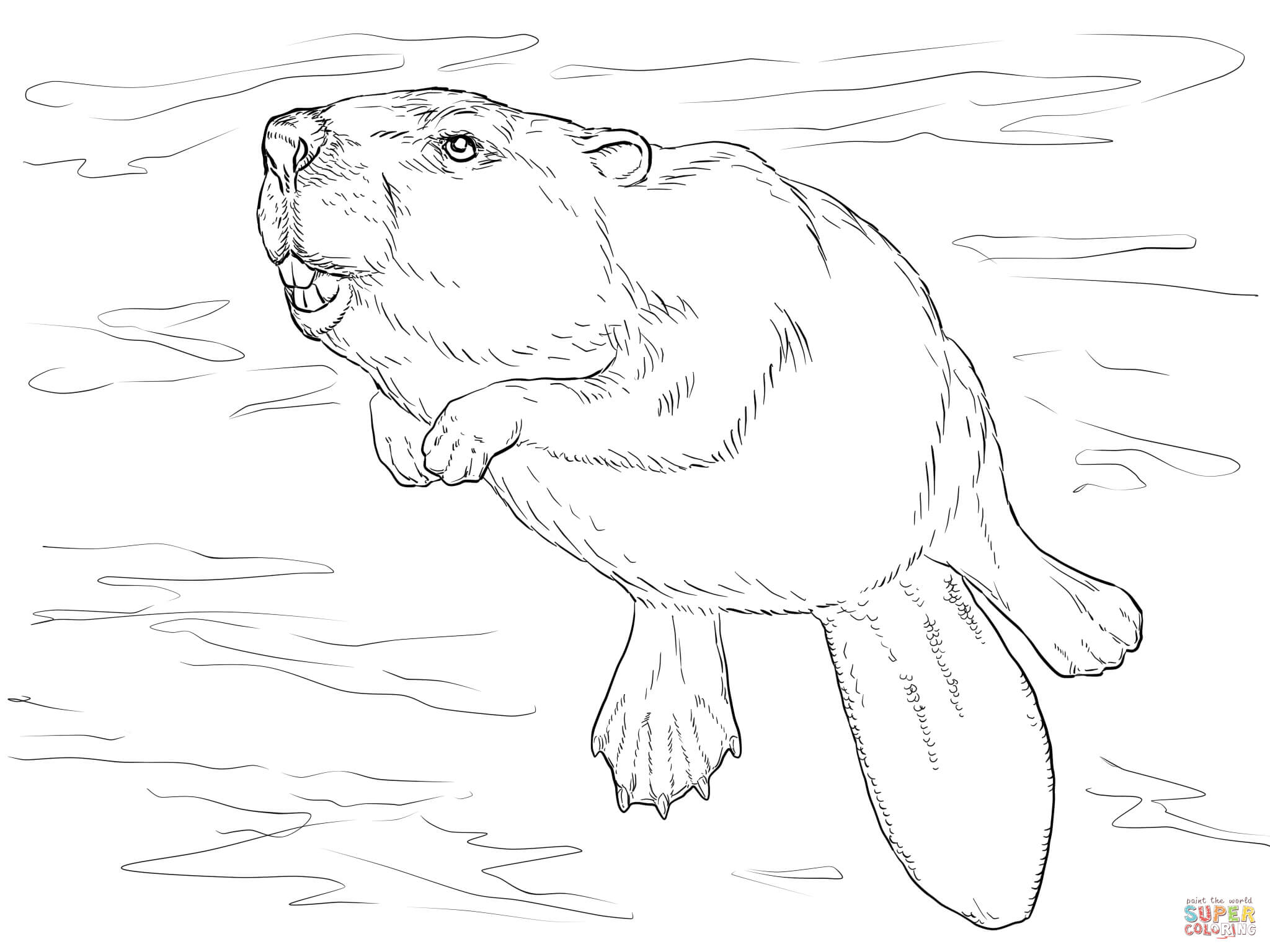how to draw a realistic beaver beaver drawing pencil sketch colorful realistic art realistic beaver to draw how a