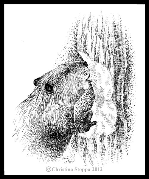 how to draw a realistic beaver beaver outline images stock photos vectors shutterstock realistic to draw beaver a how