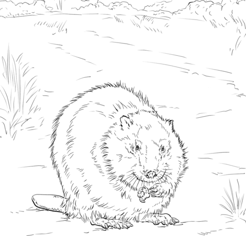 how to draw a realistic beaver canadian beaver coloring page free printable coloring pages draw to how realistic a beaver