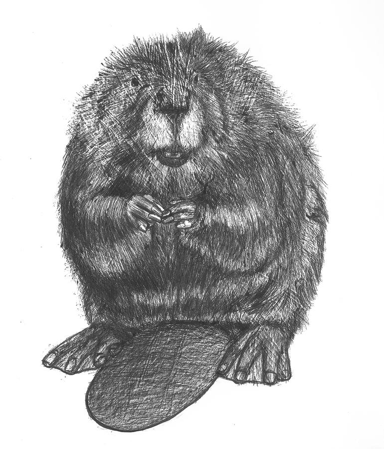 how to draw a realistic beaver free printable beaver coloring pages liste 20 à 40 to draw how realistic a beaver