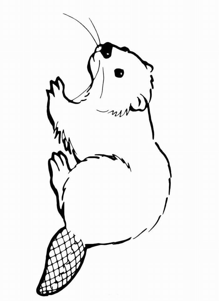 how to draw a realistic beaver library of beaver mother image royalty free to color png to beaver draw realistic how a
