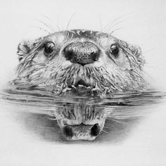 how to draw a realistic beaver quotlet them livequot written and illustrated by dorothy p to how realistic draw a beaver