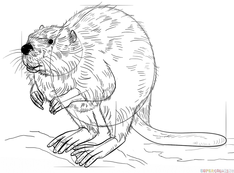 how to draw a realistic beaver sneaky beaver cartoon drawings cartoon drawings how realistic to draw beaver a