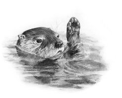 how to draw a river otter 46 best otter tattoo outlines images on pinterest tattoo a river to otter how draw
