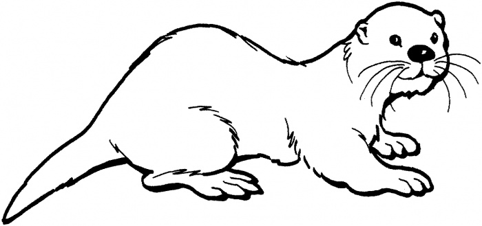 how to draw a river otter cute otter drawing google search loutre anatomie how draw to otter river a