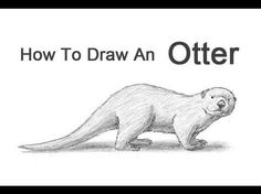 how to draw a river otter how to draw cartoon otters realistic otters drawing to draw how a otter river
