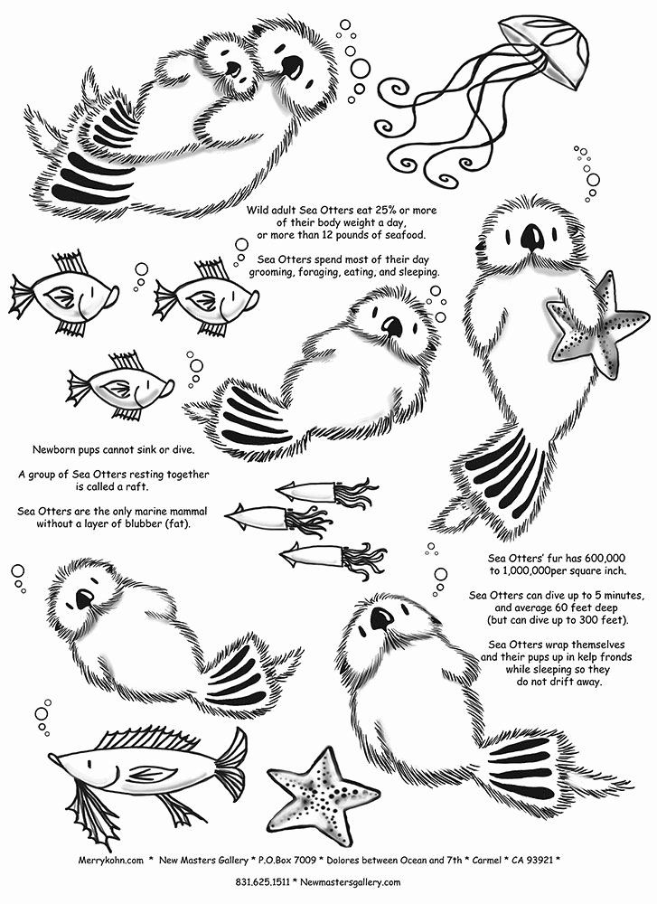 how to draw a river otter northern river otter coloring page free printable draw how to otter a river