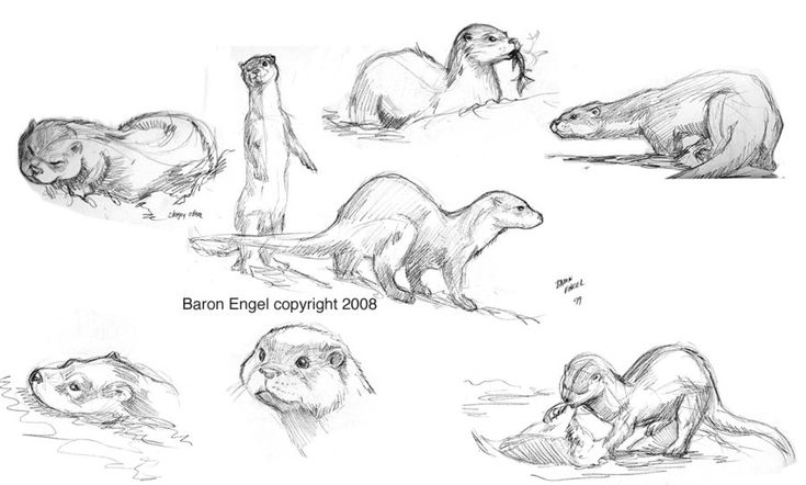 how to draw a river otter otter drawings drawing character design photoshop river a otter draw to how