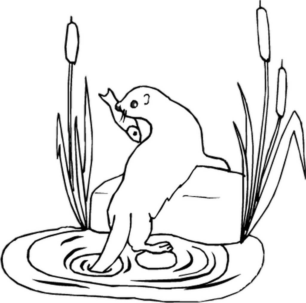 how to draw a river otter otters drawing at getdrawings free download to draw a otter how river