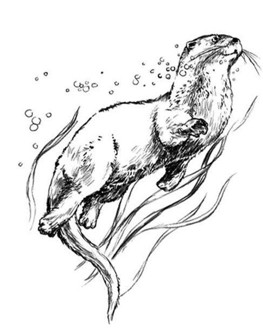 how to draw a river otter river otter drawing at getdrawings free download otter to how a draw river