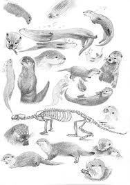 how to draw a river otter river otter swimming drawing sketch coloring page to a otter river draw how
