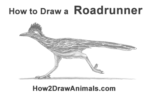 How to draw a roadrunner