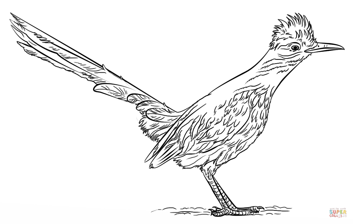 how to draw a roadrunner how to draw a roadrunner video step by step pictures draw a how to roadrunner