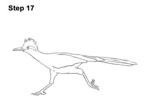 how to draw a roadrunner how to draw the road runner 12 steps with pictures roadrunner how draw to a