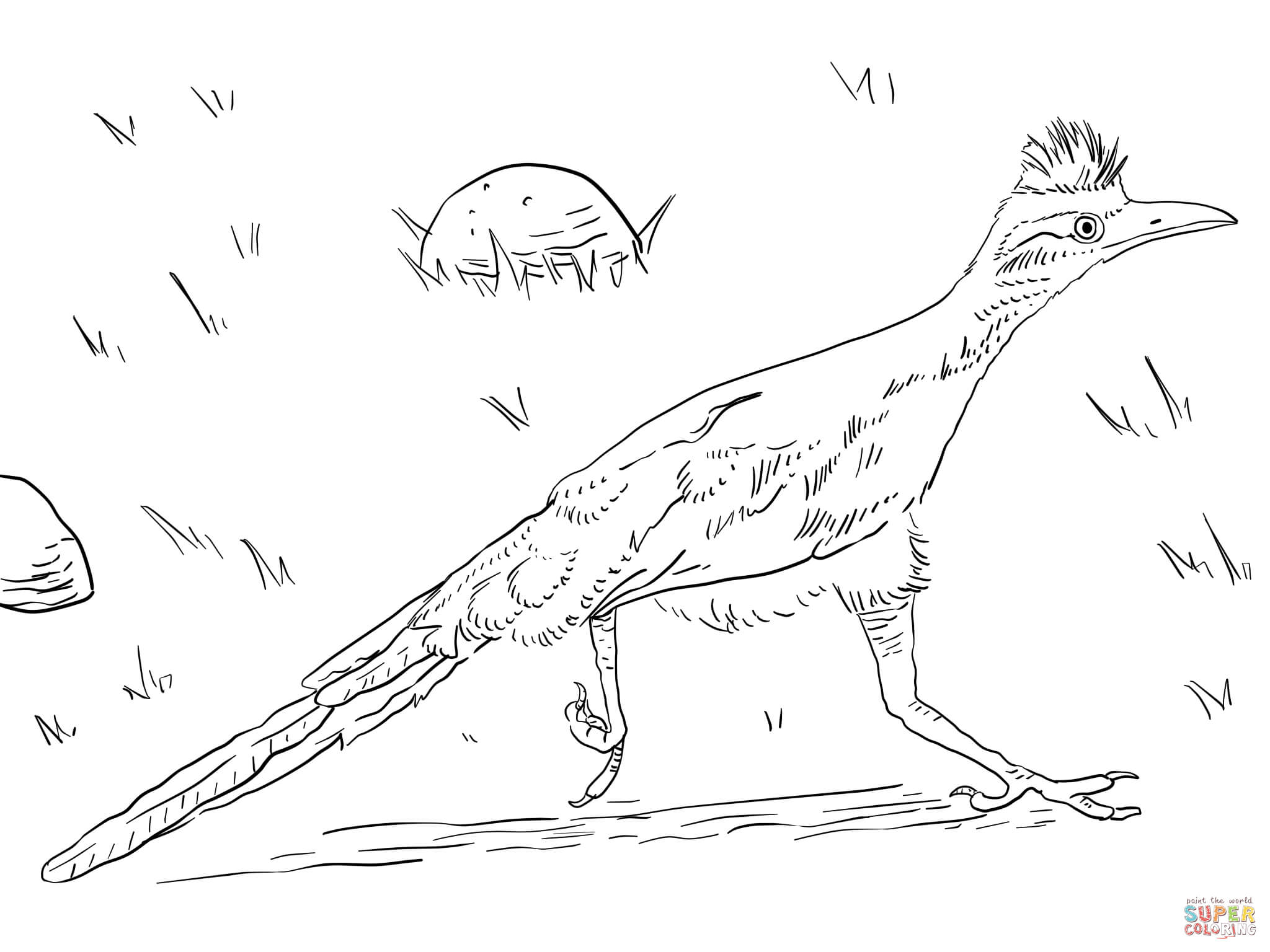 how to draw a roadrunner image result for roadrunner drawing roadrunner art road a roadrunner draw to how