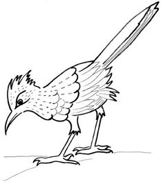 how to draw a roadrunner q s how roadrunner to draw a