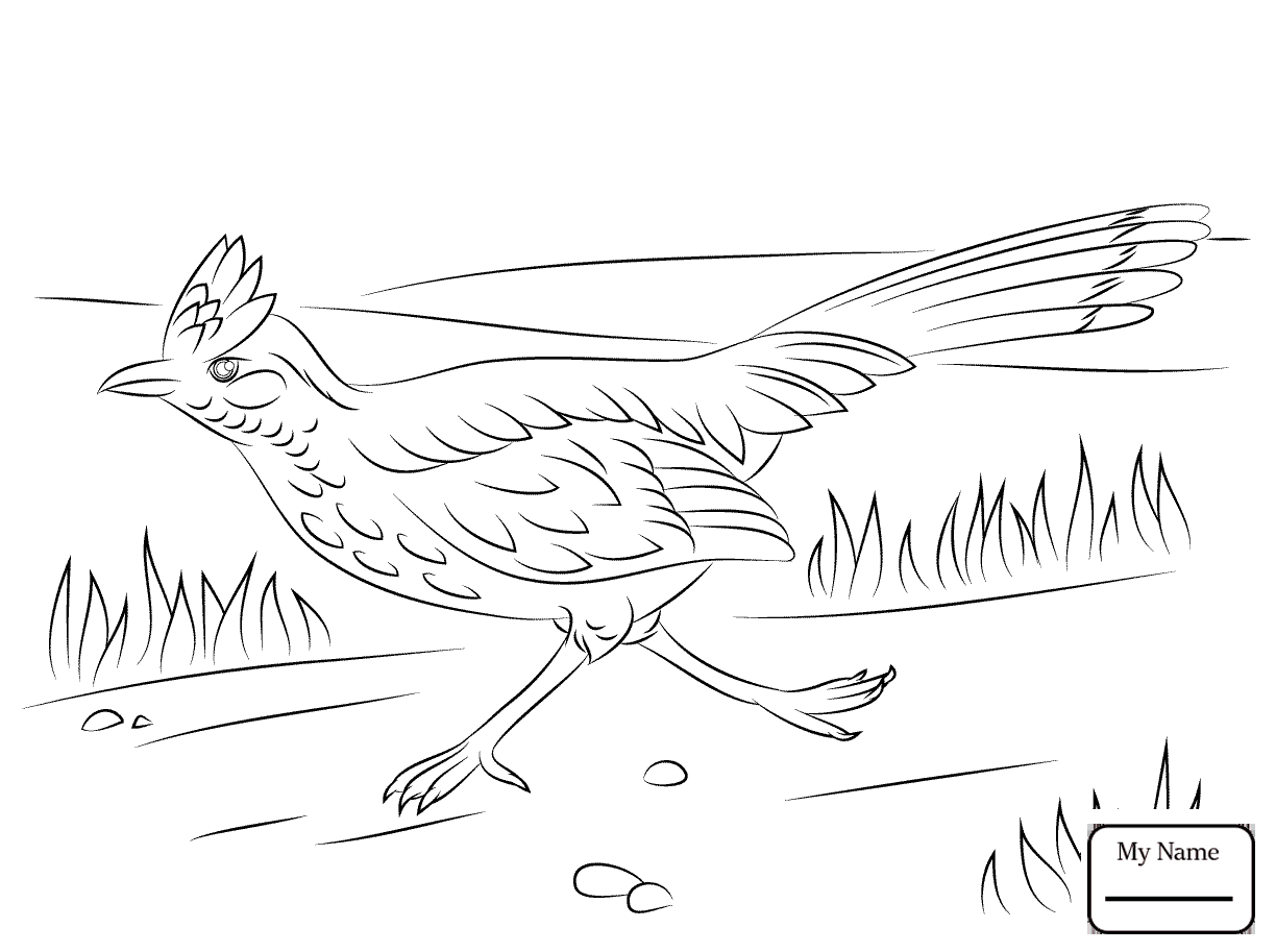 how to draw a roadrunner realistic greater roadrunner coloring page free draw how to a roadrunner