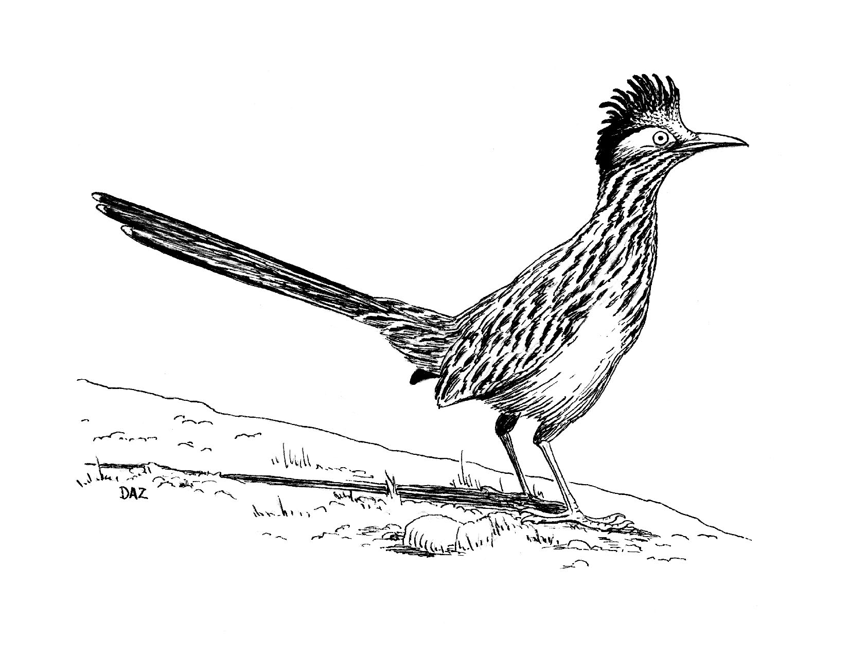 how to draw a roadrunner roadrunner bird drawing at getdrawings free download draw a roadrunner to how