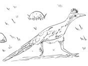 how to draw a roadrunner roadrunner bird drawing free download on clipartmag a roadrunner draw how to