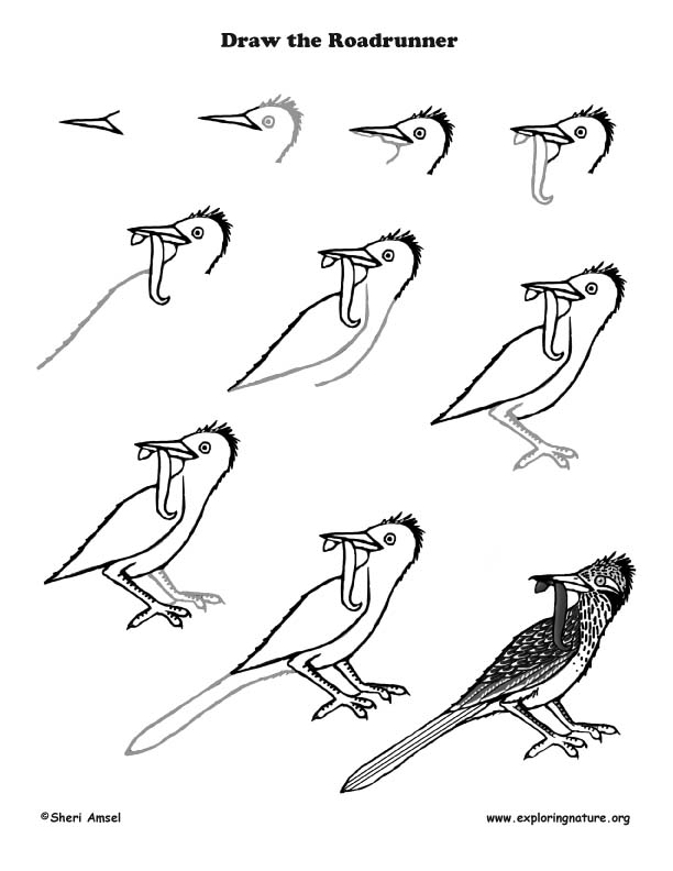 how to draw a roadrunner roadrunner clipart black and white 20 free cliparts how to a draw roadrunner