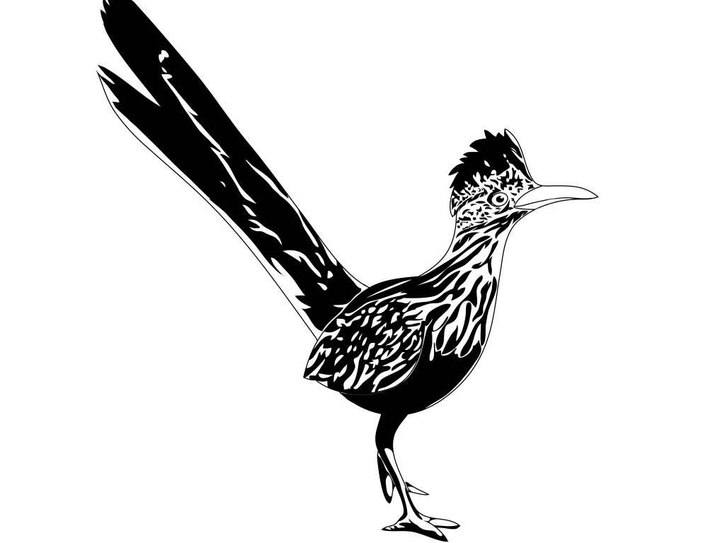 how to draw a roadrunner roadrunner drawing lesson to roadrunner a how draw
