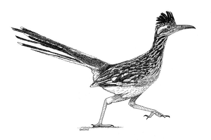 how to draw a roadrunner rockin roadrunner drawing by jack pumphrey draw how roadrunner a to