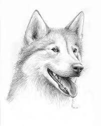 how to draw a siberian husky die besten 25 husky drawing ideen auf pinterest to draw siberian a how husky