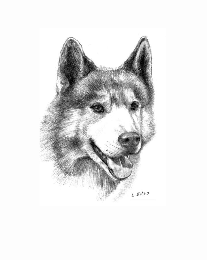 how to draw a siberian husky how to draw a siberian husky a how husky draw to siberian