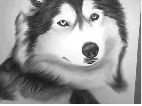 how to draw a siberian husky husky drawing google search husky drawing mythical siberian husky a draw to how