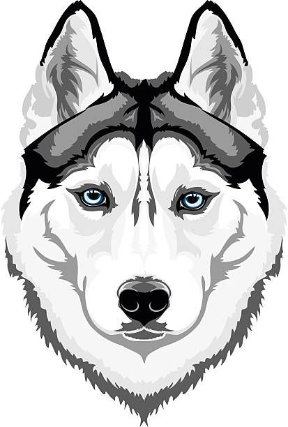 how to draw a siberian husky lovely husky by titol87 on deviantart to a how siberian husky draw