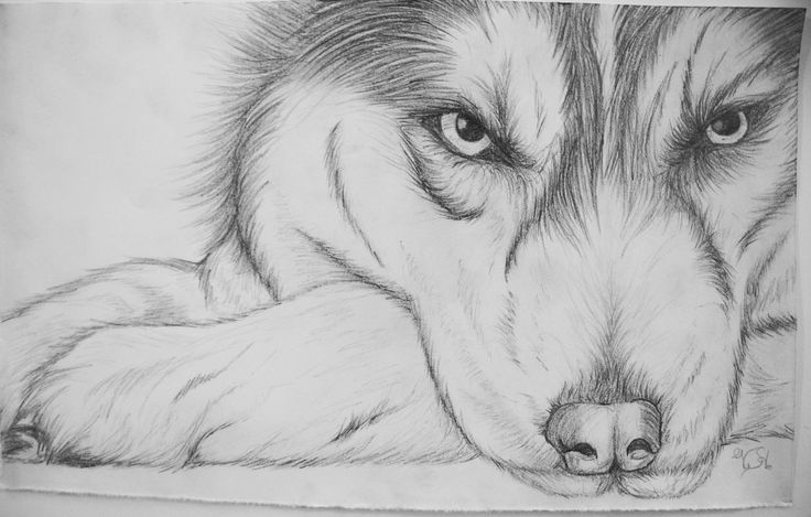 how to draw a siberian husky siberian husky drawing by sadielrodriguez on deviantart draw how siberian a to husky