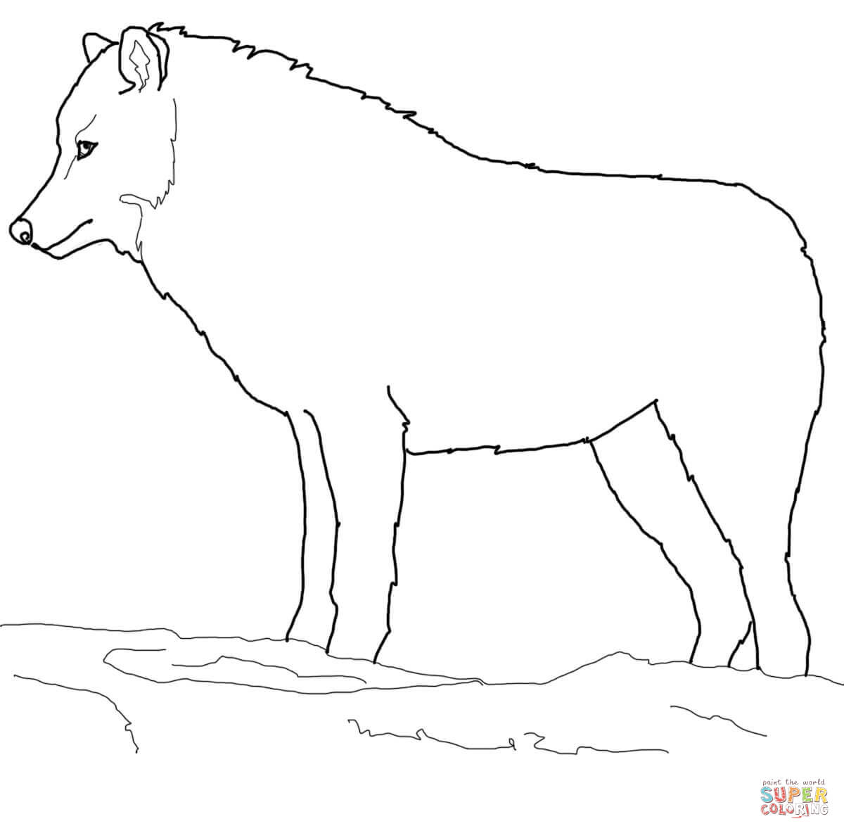 how to draw a snow wolf 32 wolf drawings pdf jpeg free premium templates snow a to draw how wolf