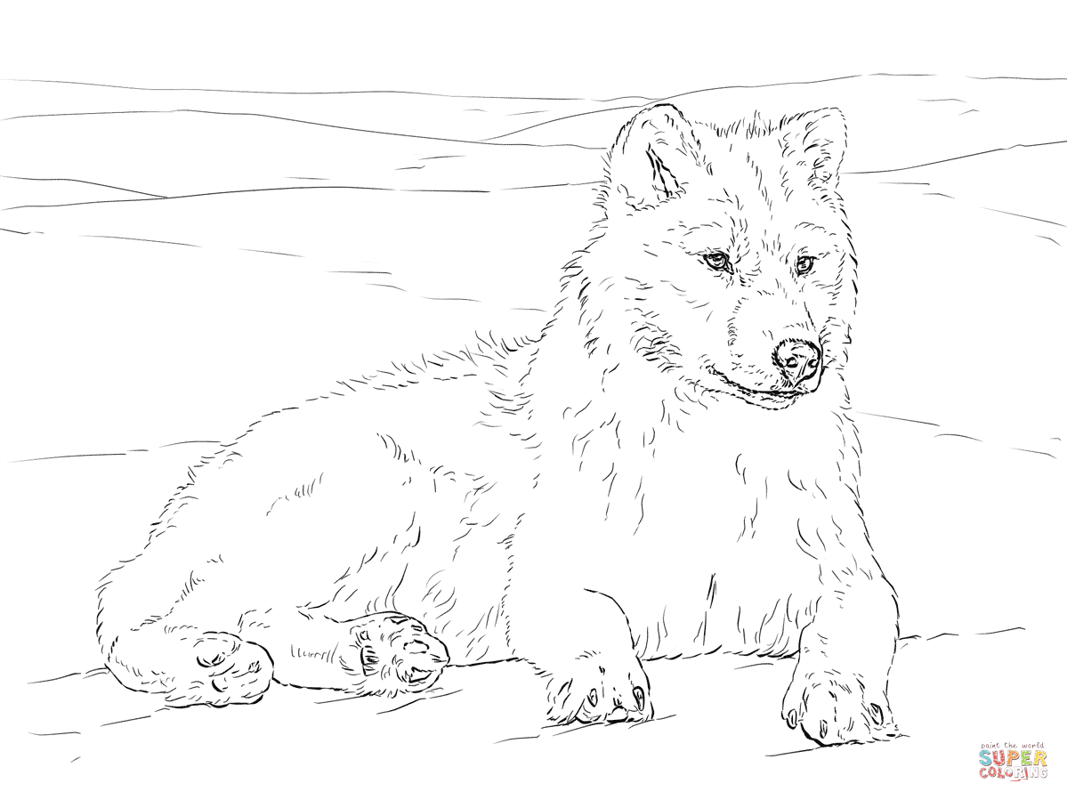 how to draw a snow wolf arctic wolf coloring page free printable coloring pages a how snow draw wolf to