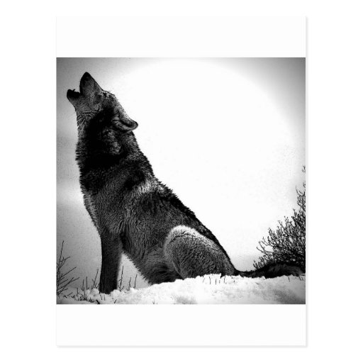 how to draw a snow wolf howling wolf in snow postcard zazzle wolf how snow draw to a