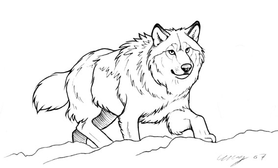 how to draw a snow wolf snow drawing at getdrawings free download a how draw snow wolf to
