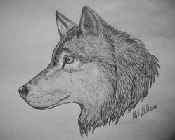 how to draw a snow wolf snow wolf by gem n ems on deviantart how a snow wolf to draw