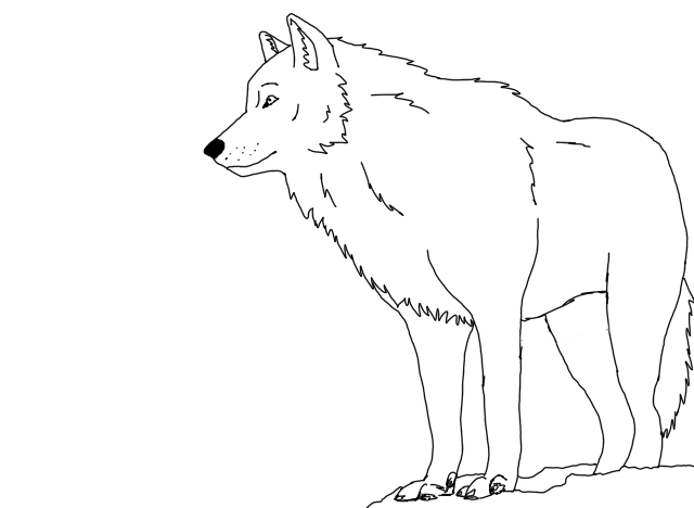how to draw a snow wolf snow wolf outlines by blacklightning95 on deviantart to a snow how wolf draw