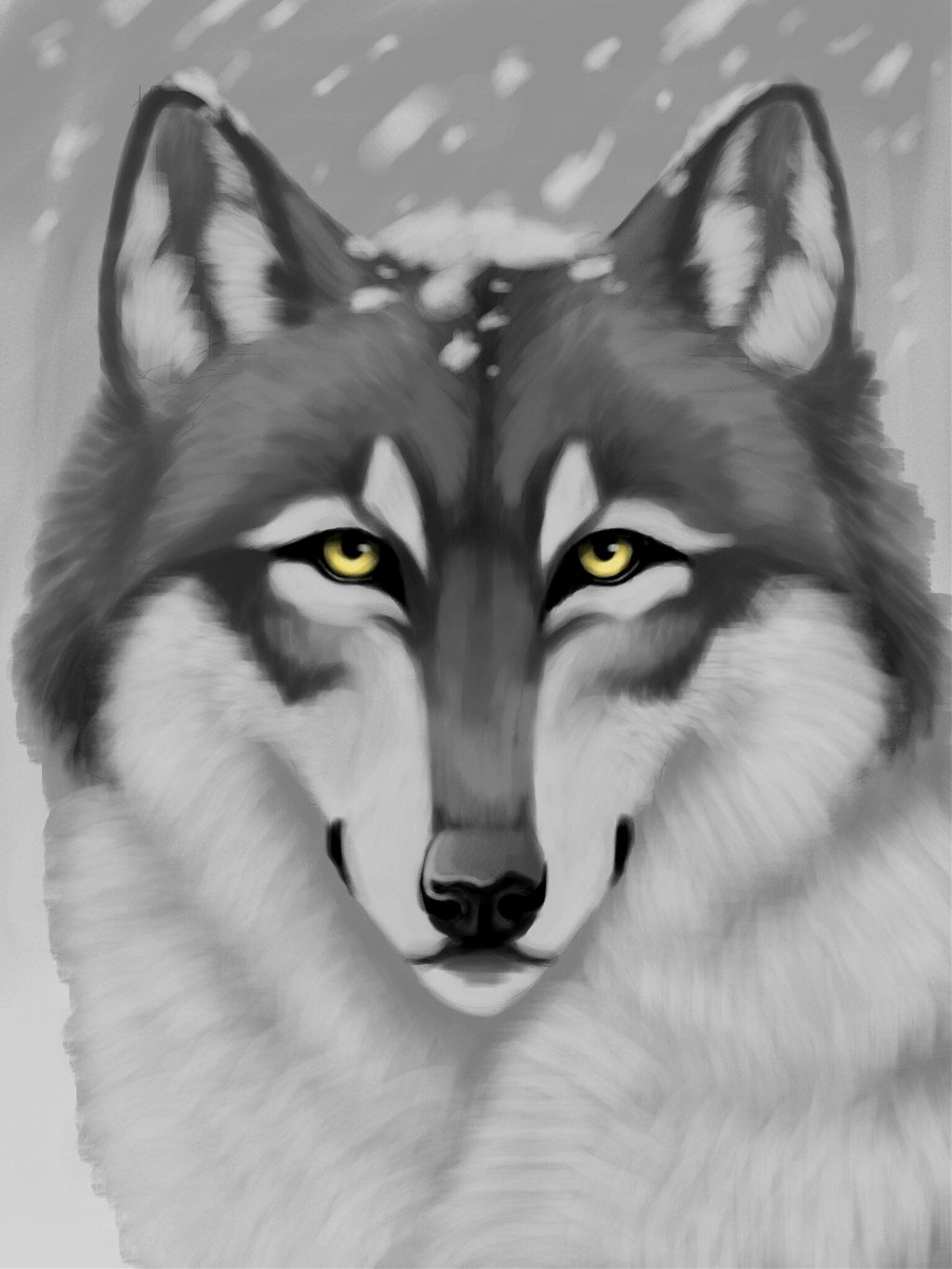 how to draw a snow wolf top how to draw a snow wolf step by step hd wallpaper snow draw a wolf to how