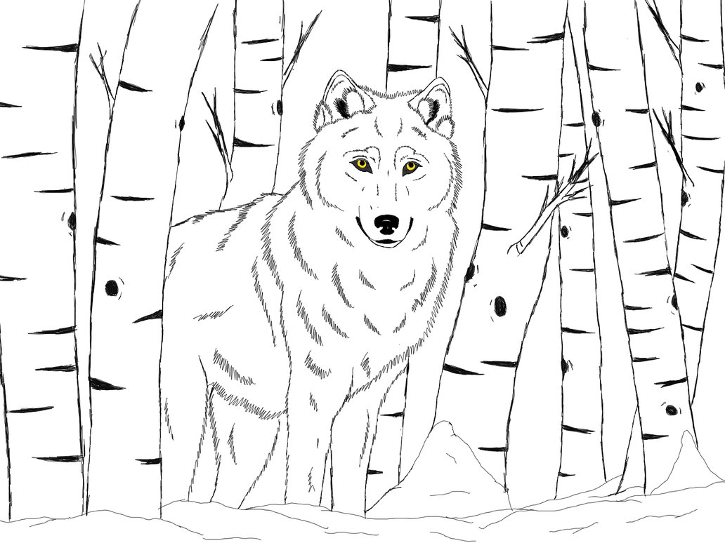 how to draw a snow wolf winter drawing images at getdrawings free download to draw how snow a wolf