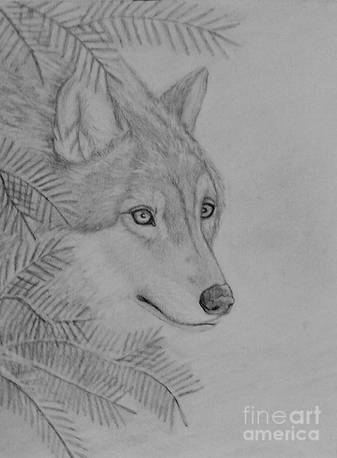 how to draw a snow wolf winter wolf drawing by peggy miller draw how wolf to snow a